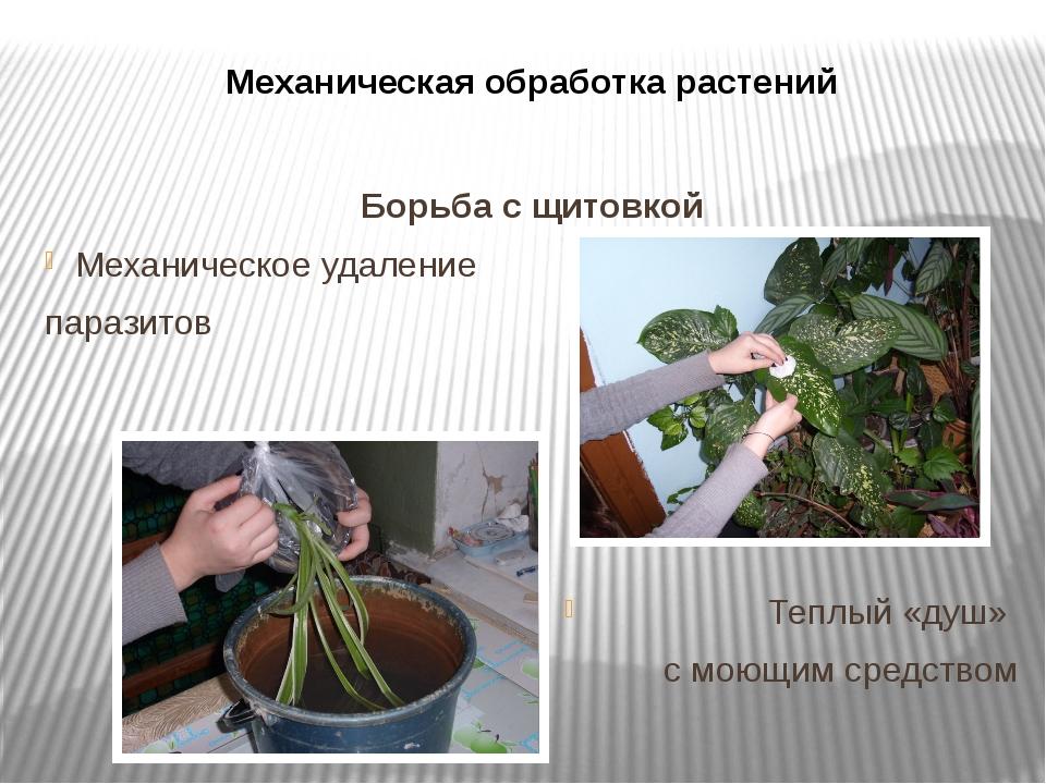 Механическая обработка растений Борьба с щитовкой Механическое удаление параз...