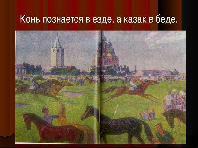 Конь познается в езде, а казак в беде. кк