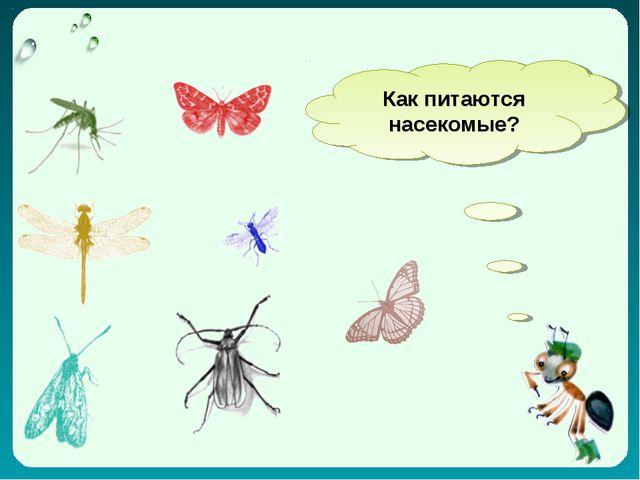 Как питаются насекомые?