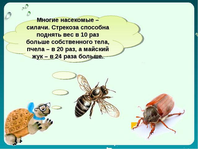 Многие насекомые – силачи. Стрекоза способна поднять вес в 10 раз больше собс...