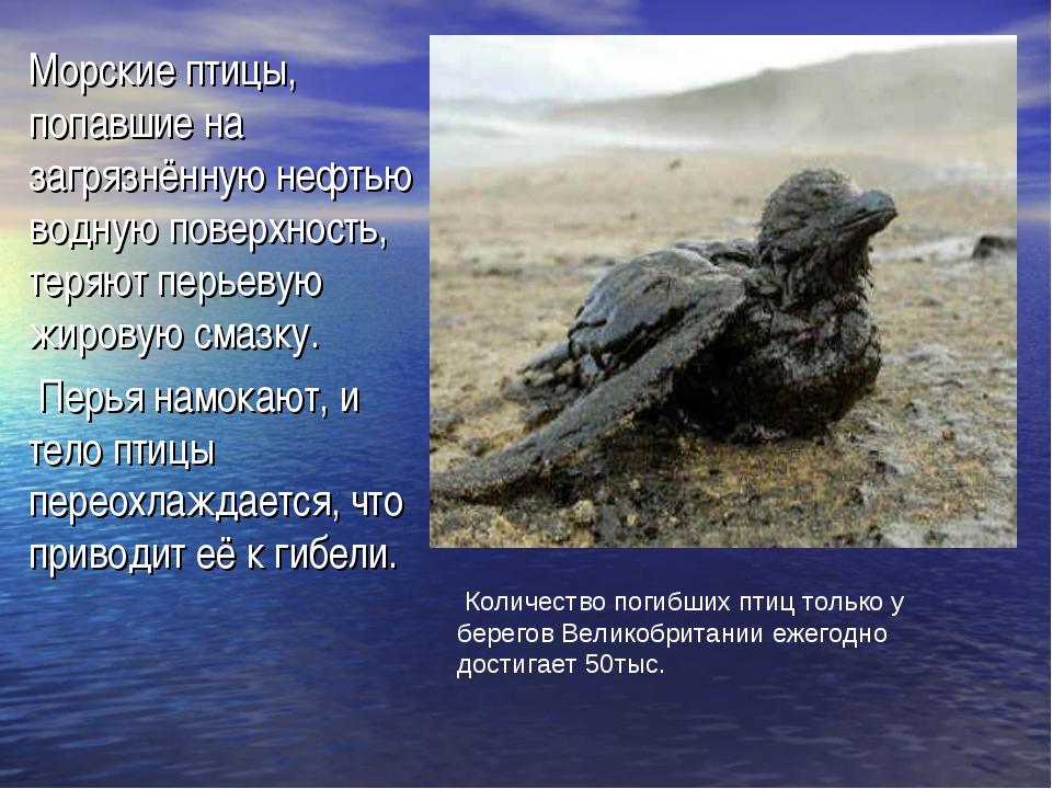 Морские птицы, попавшие на загрязнённую нефтью водную поверхность, теряют пер...