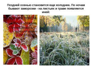 Поздней осенью становится еще холоднее. По ночам бывают заморозки - на листья