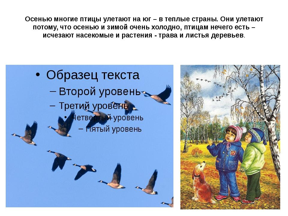 Осенью многие птицы улетают на юг – в теплые страны. Они улетают потому, что...