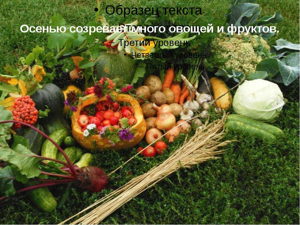 Осенью созревает много овощей и фруктов.