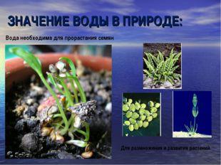 Вода необходима для прорастания семян Для размножения и развития растений ЗНА