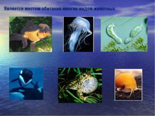 Является местом обитания многих видов животных
