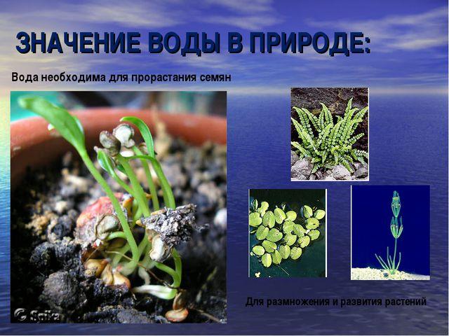 Вода необходима для прорастания семян Для размножения и развития растений ЗНА...