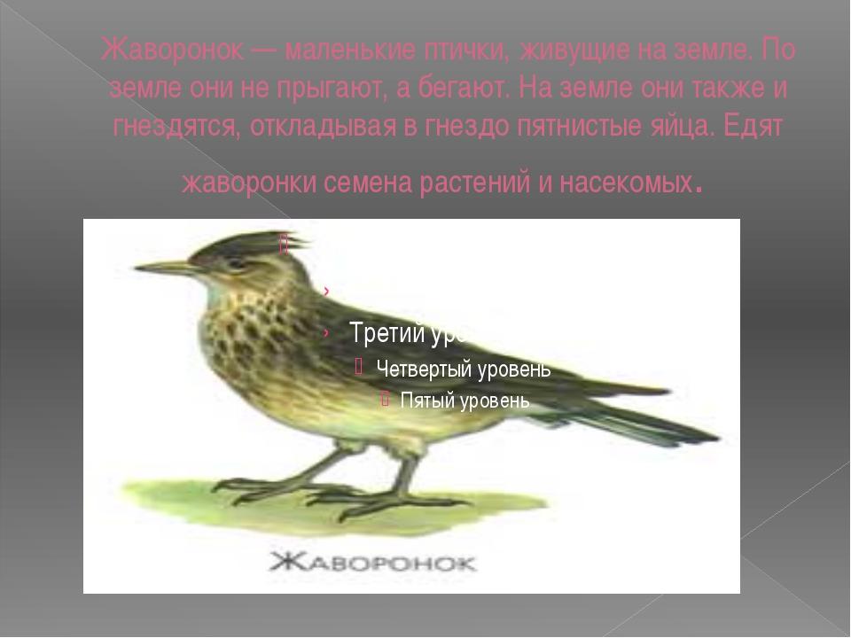 Жаворонок — маленькие птички, живущие на земле. По земле они не прыгают, а бе...
