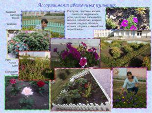 Ассортимент цветочных культур: Амарант Календула Лилия Гвоздика Клещевина Бар