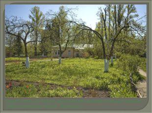 Перед главным домом располагался огород, который сестра Мария называла «Югом