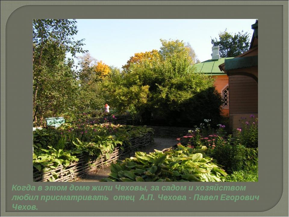 Когда в этом доме жили Чеховы, за садом и хозяйством любил присматривать отец...