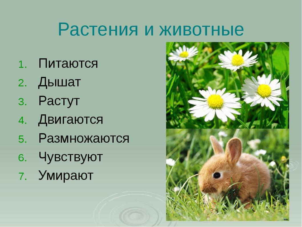 Растения и животные Питаются Дышат Растут Двигаются Размножаются Чувствуют Ум...