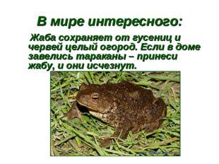 В мире интересного: Жаба сохраняет от гусениц и червей целый огород. Если в д