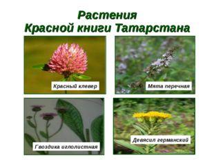 Растения Красной книги Татарстана Красный клевер Мята перечная Гвоздика иглол