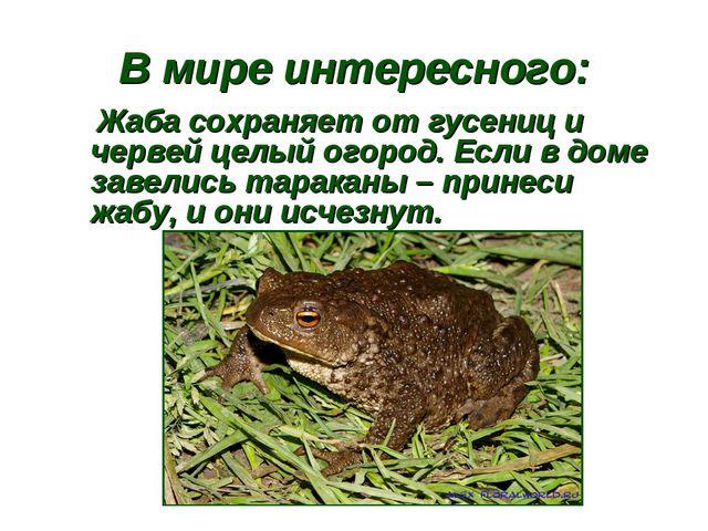 В мире интересного: Жаба сохраняет от гусениц и червей целый огород. Если в д...