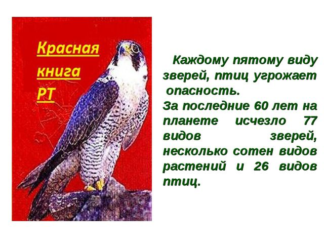 Каждому пятому виду зверей, птиц угрожает опасность. За последние 60 лет на...