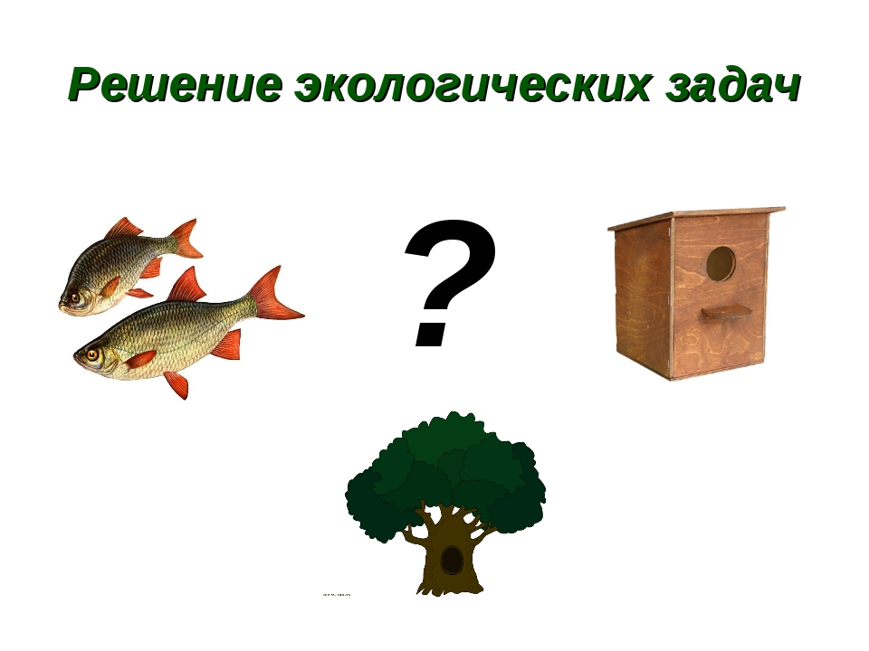 Решение экологических задач ?