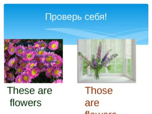 Проверь себя! These are flowers Those are flowers