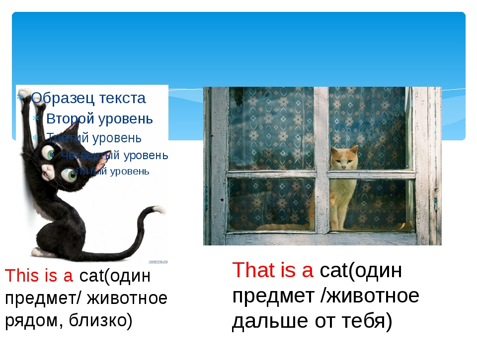This is a cat(один предмет/ животное рядом, близко) That is a cat(один предм...