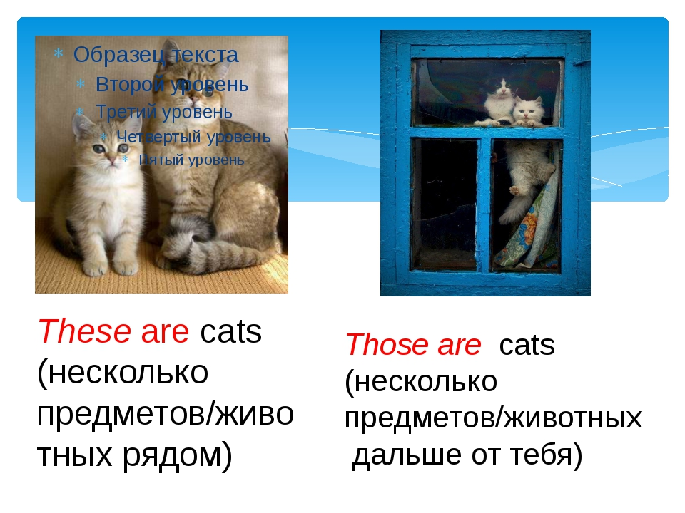 These are cats (несколько предметов/животных рядом) Those are cats (нескольк...