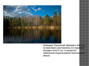 """Заповедник """"Керженский"""" образован в 1993 году на левом берегу реки Керженец."""