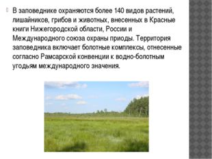 В заповеднике охраняются более 140 видов растений, лишайников, грибов и живо