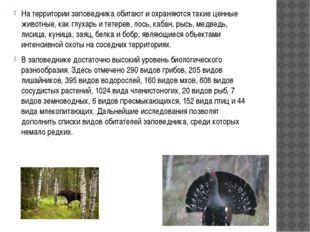 На территории заповедника обитают и охраняются такие ценные животные, как гл