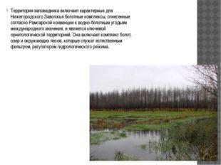 Территория заповедника включает характерные для Нижегородского Заволжья боло