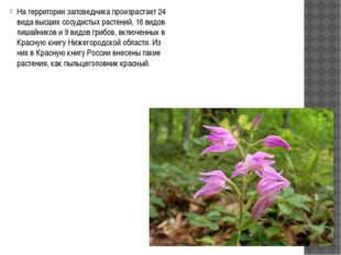 На территории заповедника произрастает 24 вида высших сосудистых растений, 1