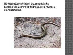 Из охраняемых в области видов рептилий в заповеднике достаточно многочисленн