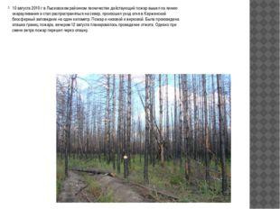10 августа 2010 г в Лысковском районном лесничестве действующий пожар вышел