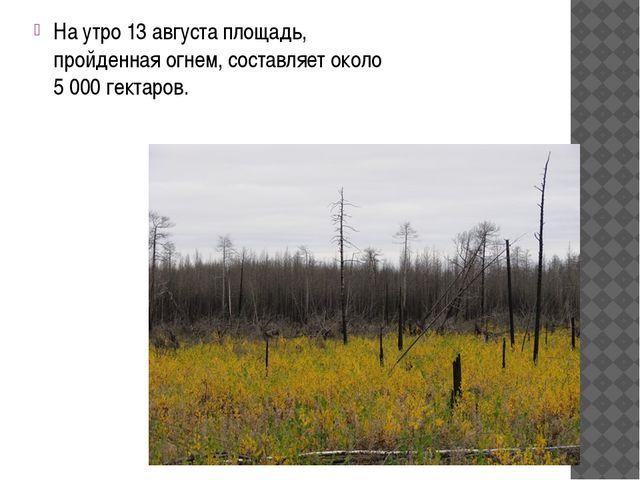 На утро 13 августа площадь, пройденная огнем, составляет около 5 000 гектаров.