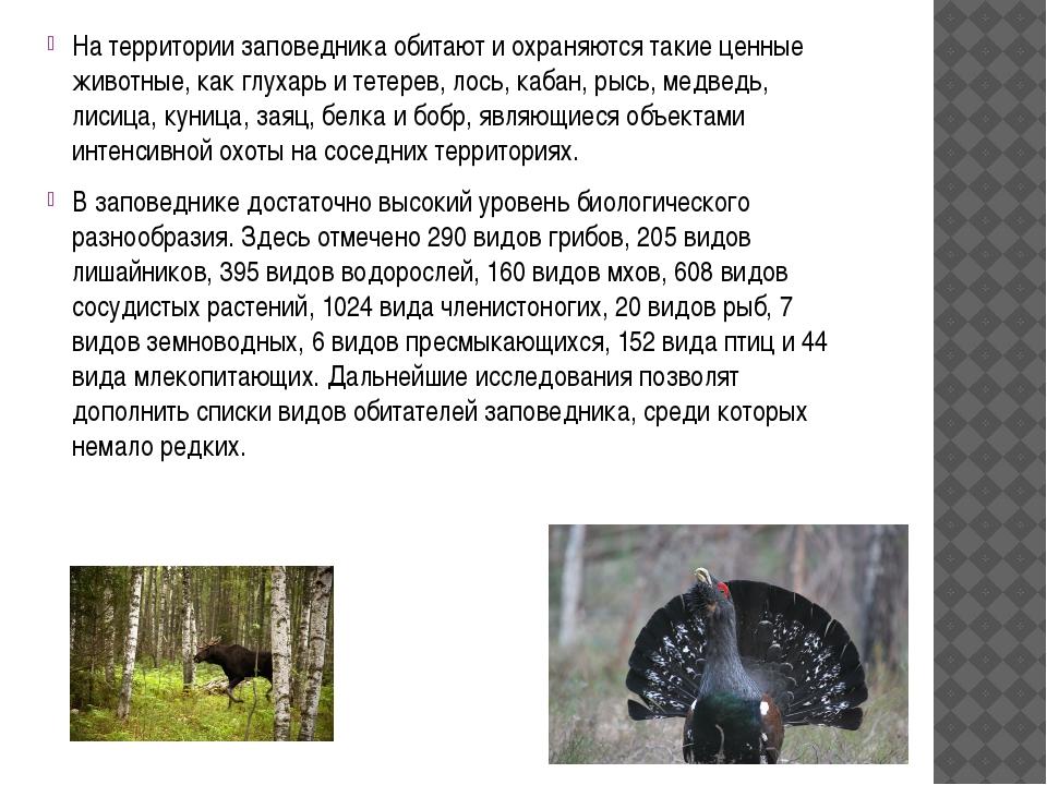 На территории заповедника обитают и охраняются такие ценные животные, как гл...