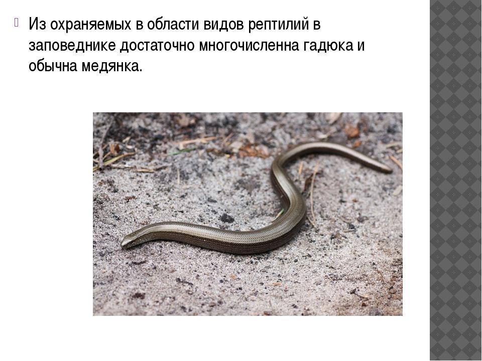 Из охраняемых в области видов рептилий в заповеднике достаточно многочисленн...
