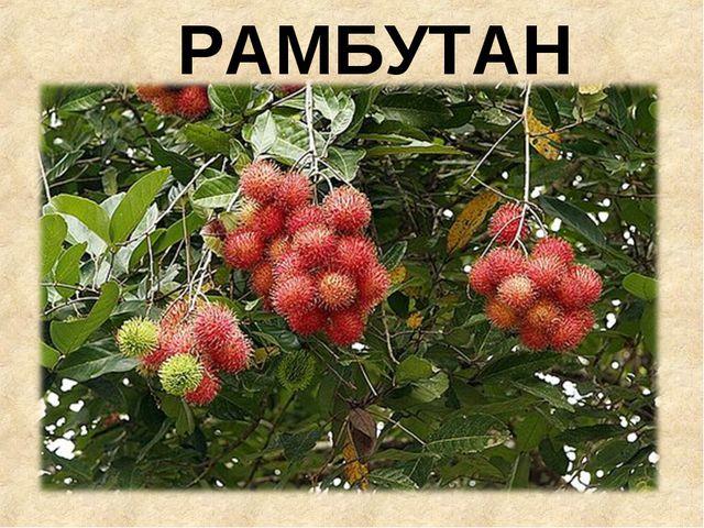 РАМБУТАН