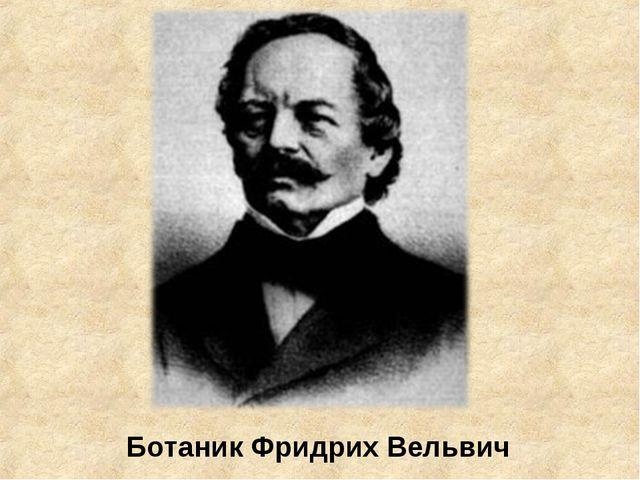 Ботаник Фридрих Вельвич