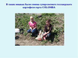 В таких мешках были семена суперэлитного голландского картофеля сорта COLOMBA