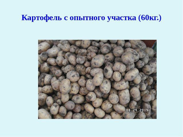 Картофель с опытного участка (60кг.)