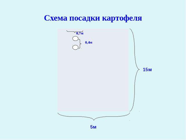 Схема посадки картофеля 15м 5м 0,7м 0,4м 0,7м