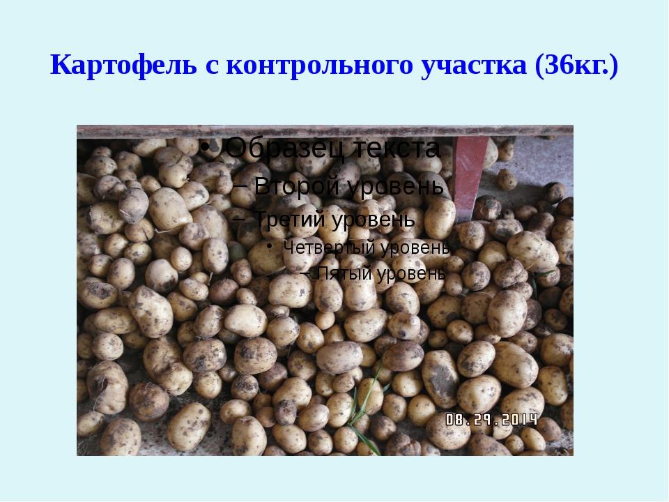 Картофель с контрольного участка (36кг.)