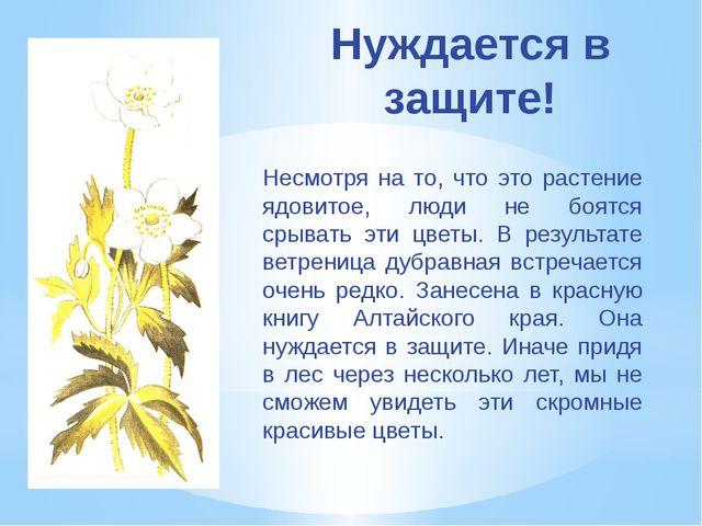 Нуждается в защите! Несмотря на то, что это растение ядовитое, люди не боятся...