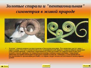 """Золотые спирали и """"пентагональная"""" симметрия в живой природе Золотые"""" спирали"""