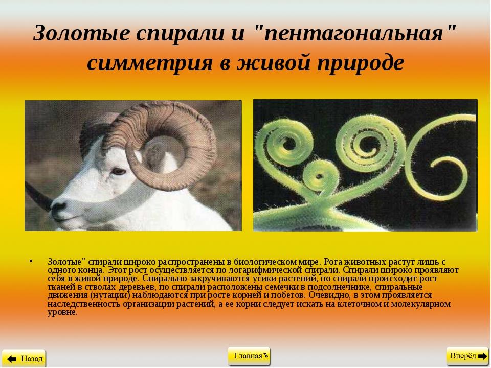 """Золотые спирали и """"пентагональная"""" симметрия в живой природе Золотые"""" спирали..."""