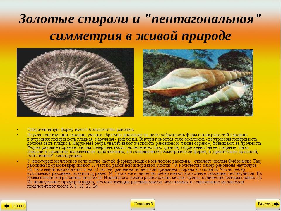 """Золотые спирали и """"пентагональная"""" симметрия в живой природе Спиралевидную фо..."""