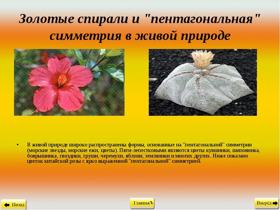 """Золотые спирали и """"пентагональная"""" симметрия в живой природе В живой природе..."""