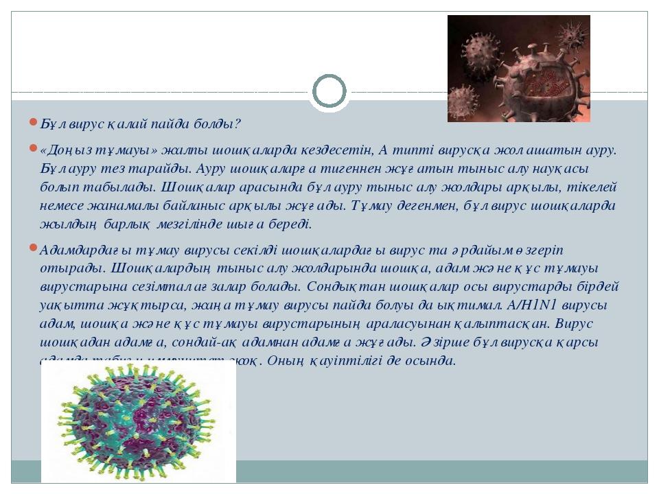 Бұл вирус қалай пайда болды? «Доңыз тұмауы» жалпы шошқаларда кездесетін, А т...