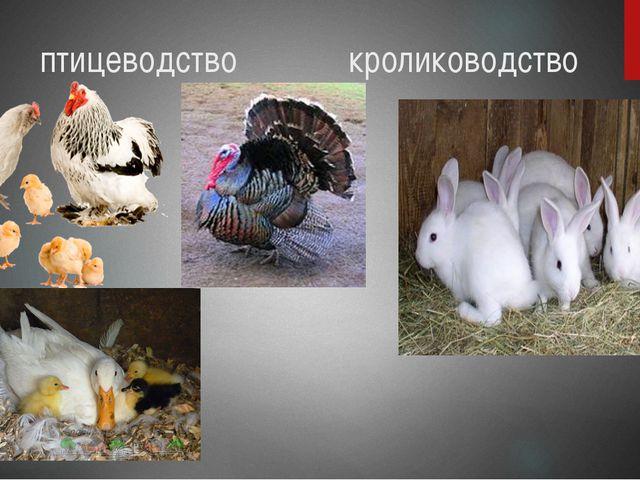 птицеводство кролиководство