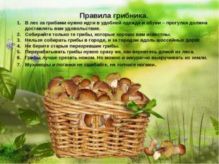 Правила грибника. В лес за грибами нужно идти в удобной одежде и обуви – про