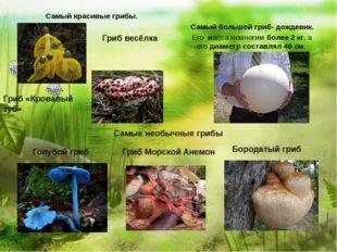 Самый красивые грибы. Самый большой гриб- дождевик. Его масса немногимболе