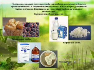 Человек использует полезные свойства грибов в различных областях промышленно